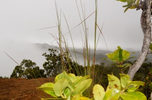 Waimea Canyon: Above the Clouds