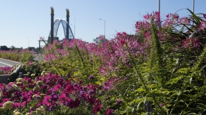 Wild Flower line the bridge as you south to the entrance of the Bridge and sculpture by Catherine Widgery.